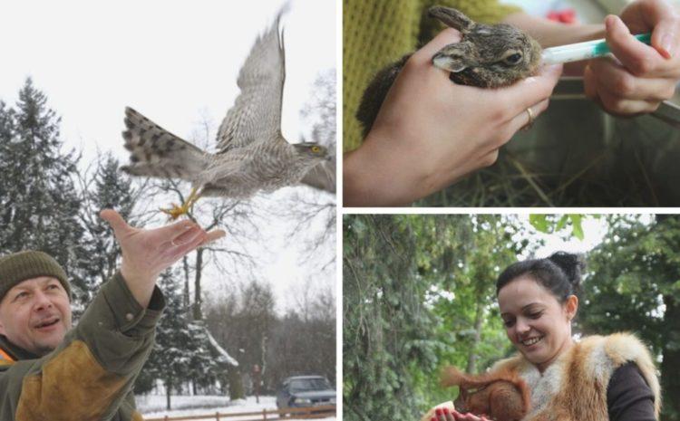 Działania na rzecz ochrony przyrody w naszym ośrodku w Czempiniu